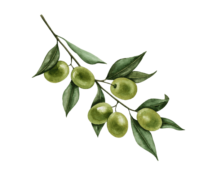 Holy Napoli Pizza real green olives highest quality ingredients